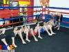 hyefighters-gfc-muay-thai-49